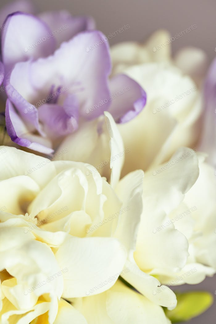 Close Up View on a Bouquet of Freesias.