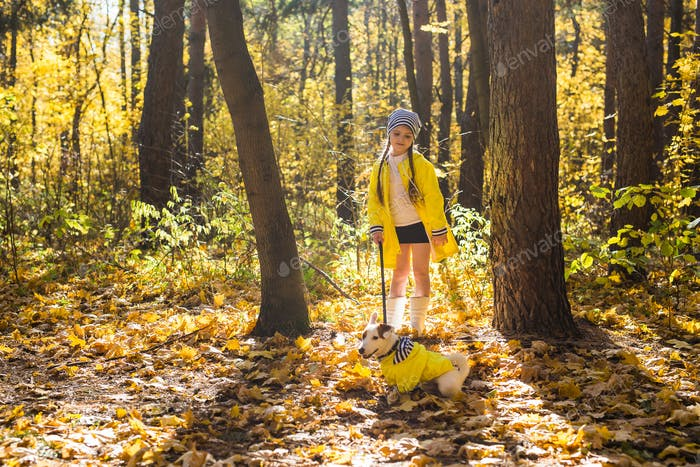 Child plays with Jack Russell Terrier in autumn forest. Autumn walk with a dog