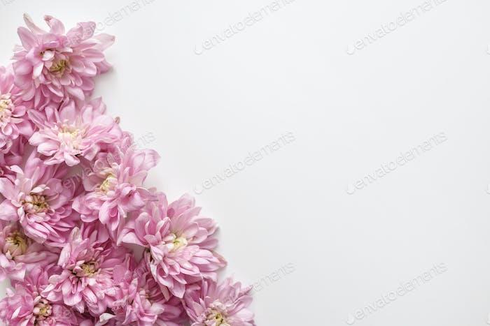 Floral border on white background. Chrysanthemum buds background