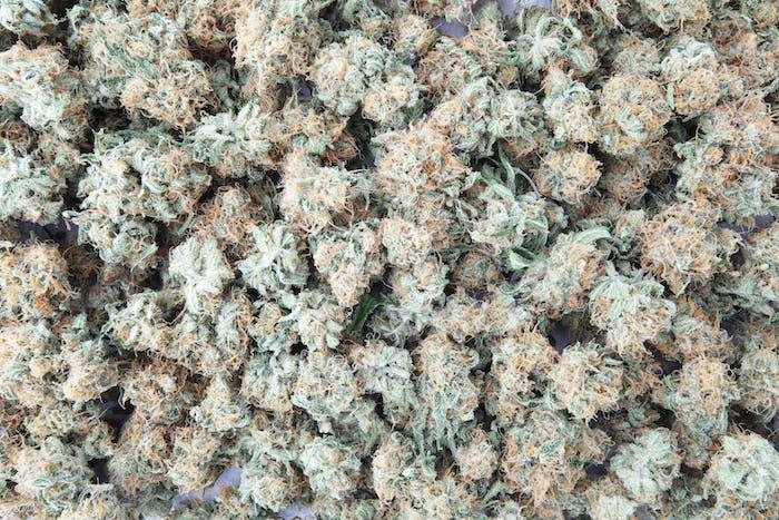 Cannabis Buds Texture