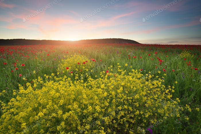 Spring flowers in meadow.