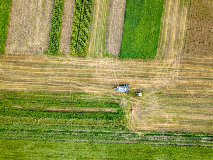 Panoramic view of combine harvester reaps a crop in the field. Top view from drone