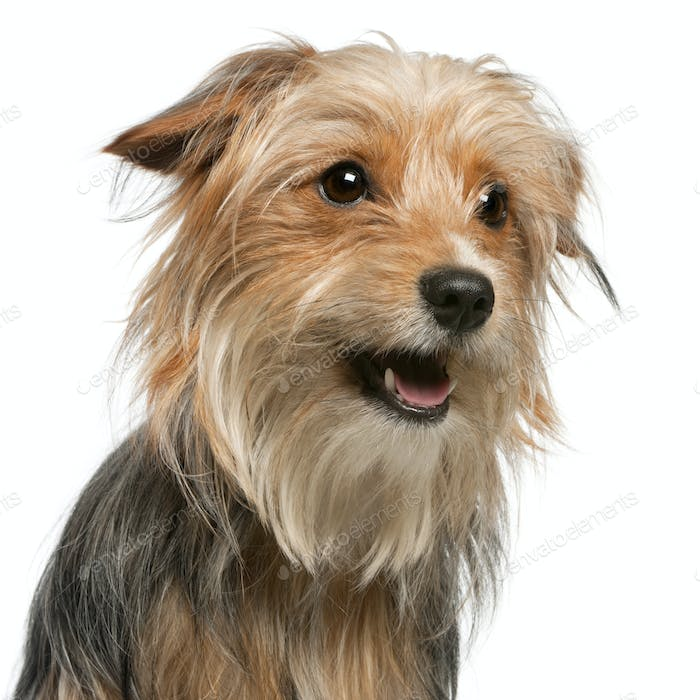 Close-up of Mixed-breed dog, 12 months old, in front of white background