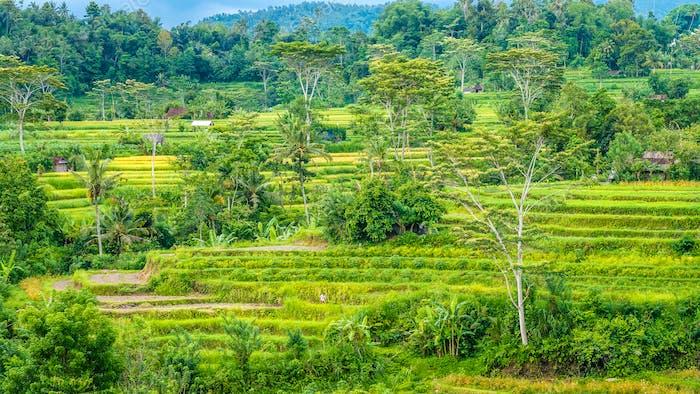 Reisteerassen und einige Hütten zwischen, Sidemen, Bali, Indonesien