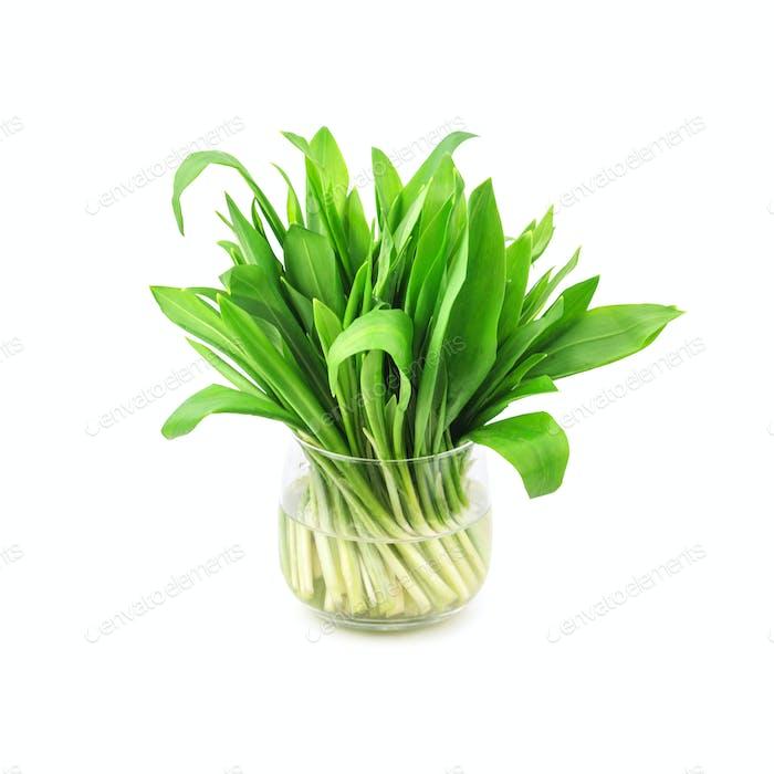 wild_garlic