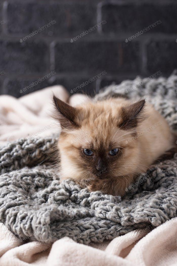 Маленький смешной котенок на трикотажных плед
