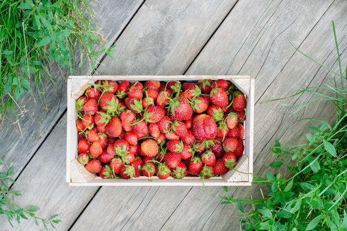 Erdbeere in einer Box