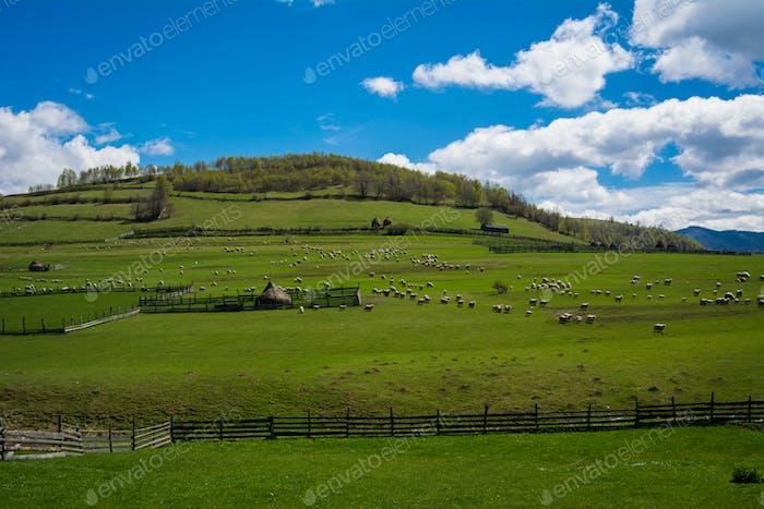 Rural Landscape in Summer