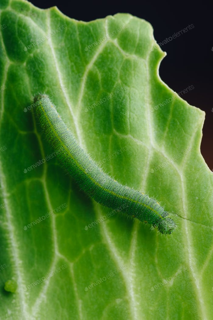Green Caterpillar Crawling on a Leaf