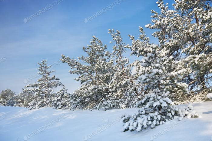 Winter landscape nature
