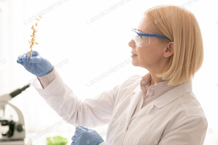 Growing plant in laboratory conditions