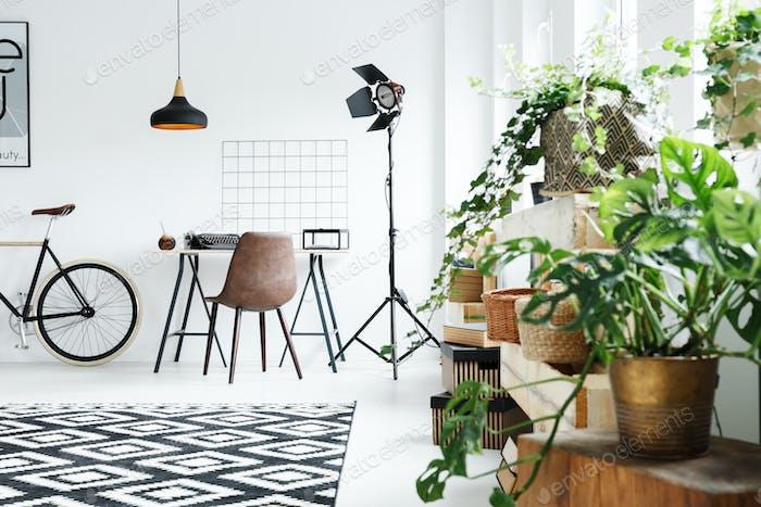 Plants in modern room