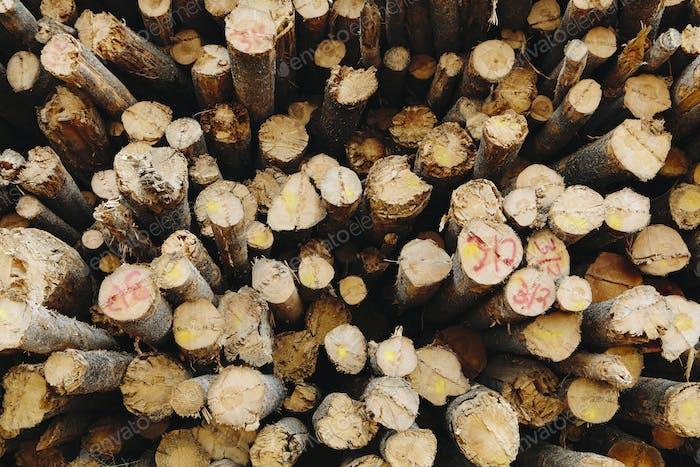 Ein Stapel geschnittener Holzstämme, Lodge Pole Kiefern in einer Holzmühle.