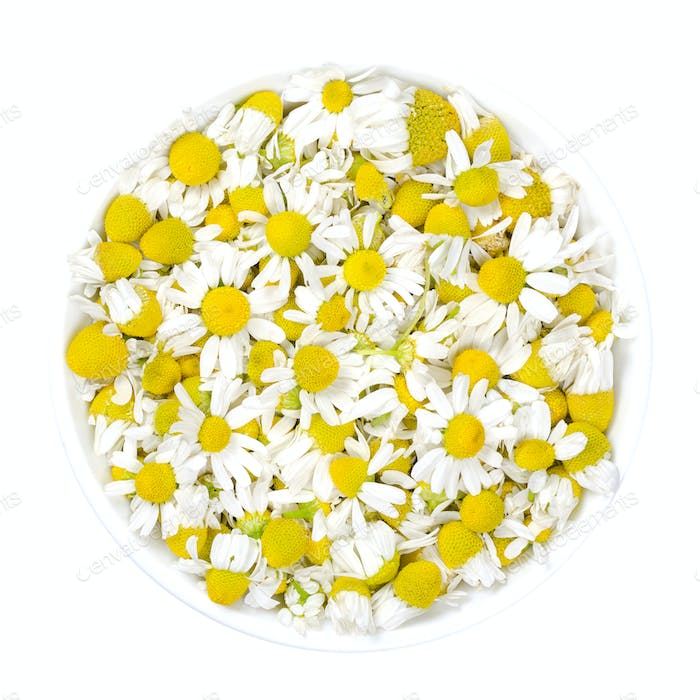 Chamomile blossoms, camomile flowers in white bowl