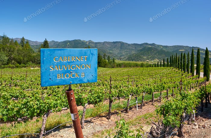 Cabernet Sauvignon wine grape variety sign in vineyard