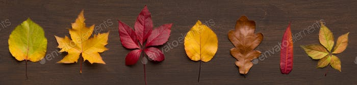 Set of different dried leaves on wooden background