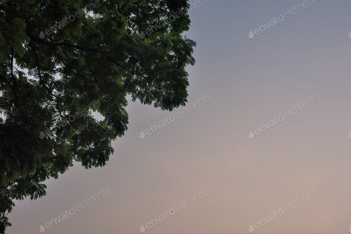 Evening Sky with Tree Branches and Leaves