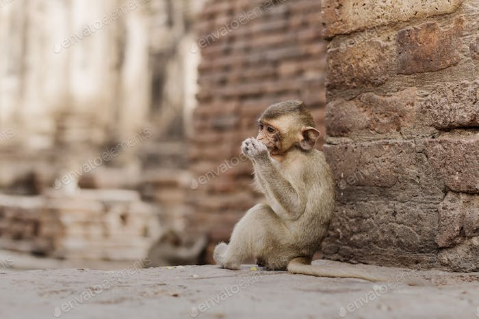 Baby monkey are eating food