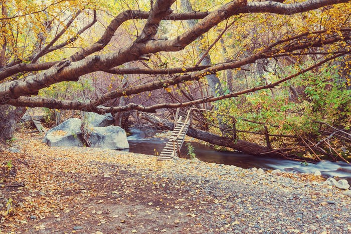 Riachuelo de otoño