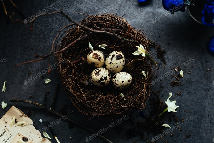 Horizontal View of Quail Eggs in Nest