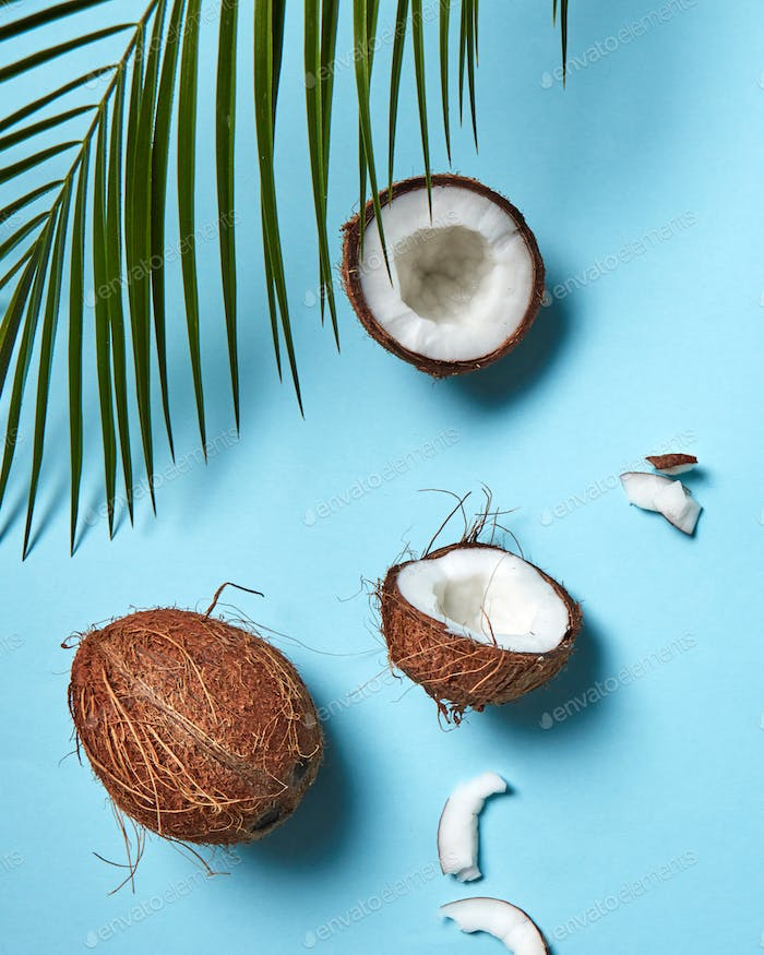 Pieces and whole coconut with palm green leaf on a blue background copy space for text. Food