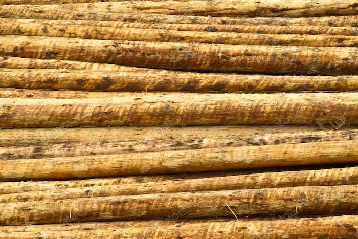 Fresh Cut Timber