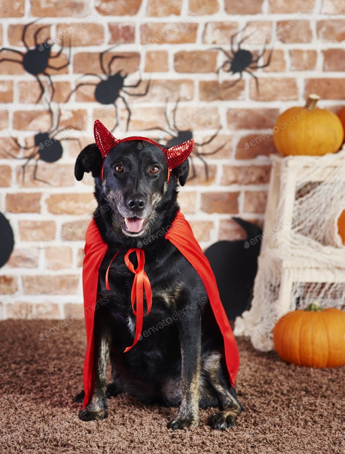 Happy dog in devil costume