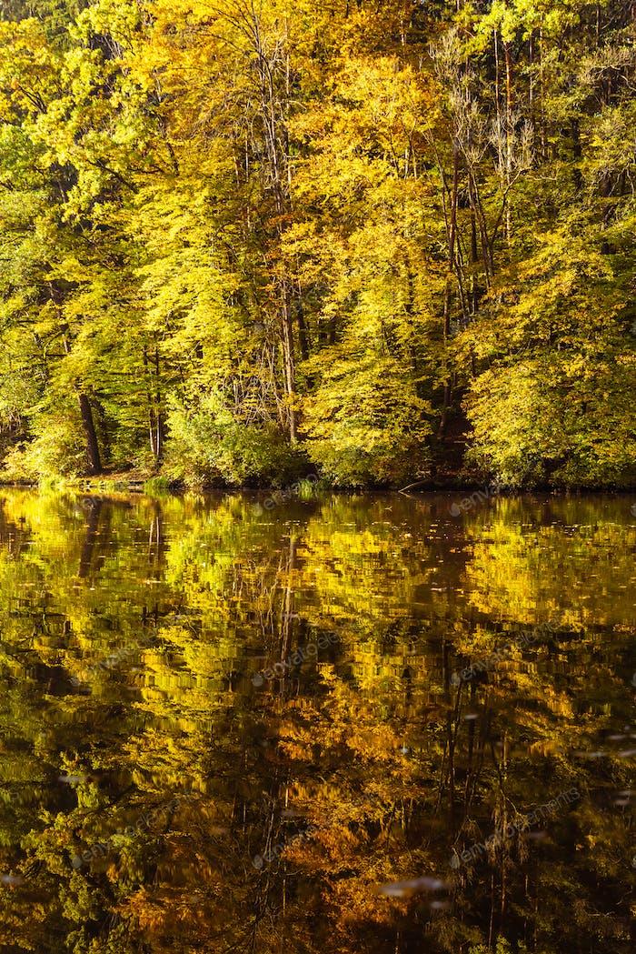 Seennebellandschaft mit Herbstlaub und Baumreflexionen