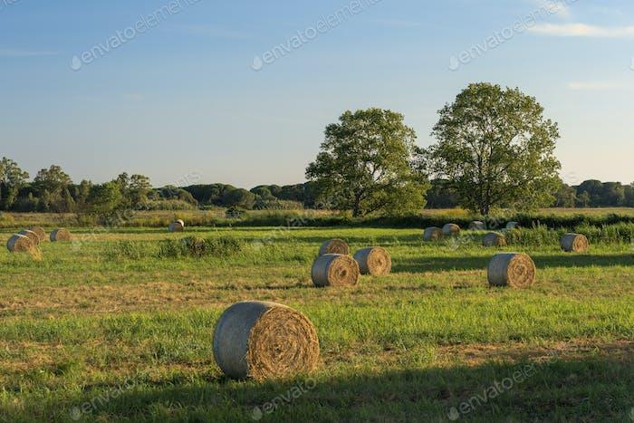 Rural landscape near Capalbio, in Maremma, Tuscany