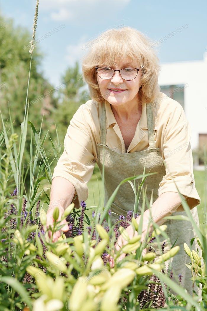 Mature Woman Working In Garden