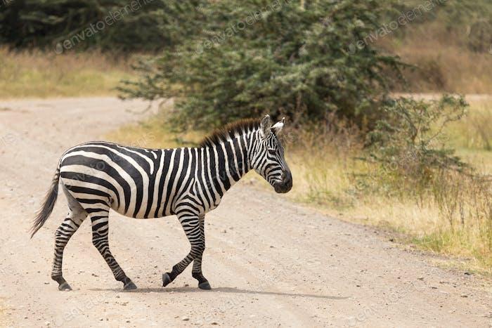 Ngorongoro-205
