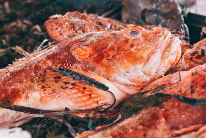 Red fish with seagrass at fish market