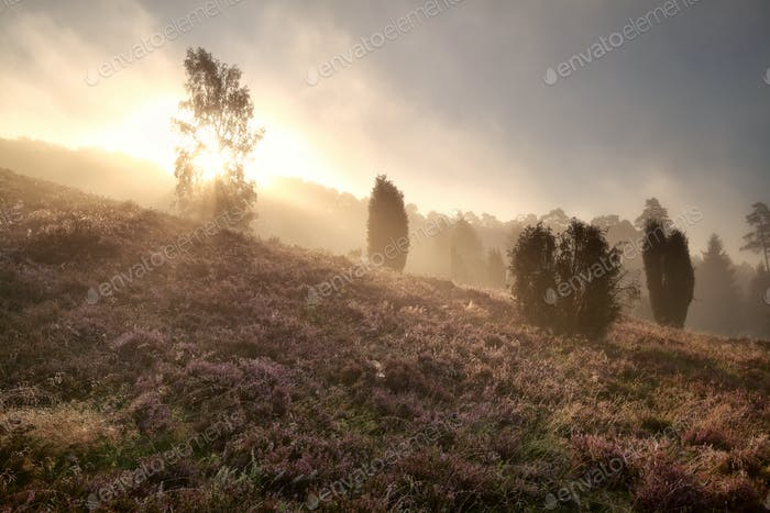sunbeams through fog in morning