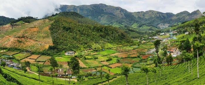 Tea plantations in Yellapatty village in Munnar, Kerala, India