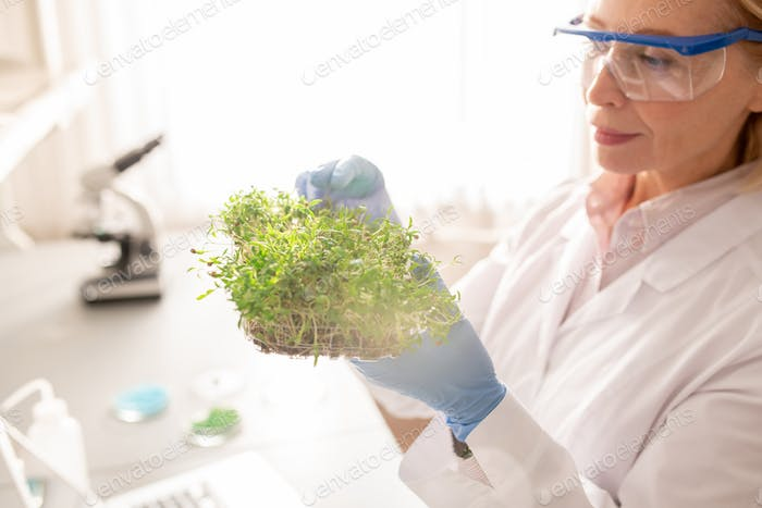 Experimenting with seedling in laboratory