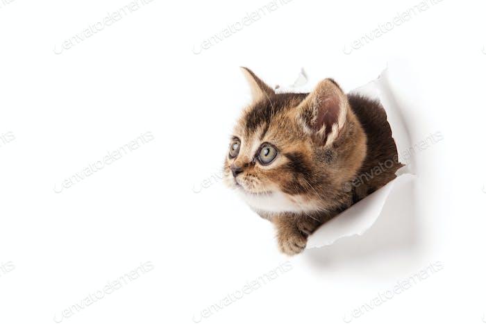 Kätzchen nach oben in Papier.