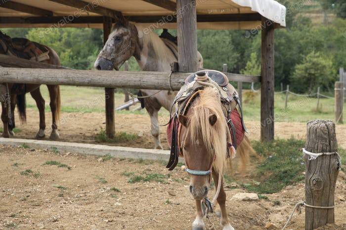A Beautiful Pony Horse in a Farm with Other Horses
