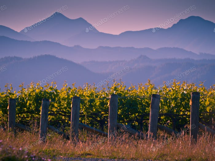Vineyard with mountain background