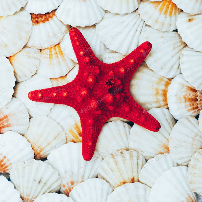 background seashells and starfish. Beach mood. Minimal art