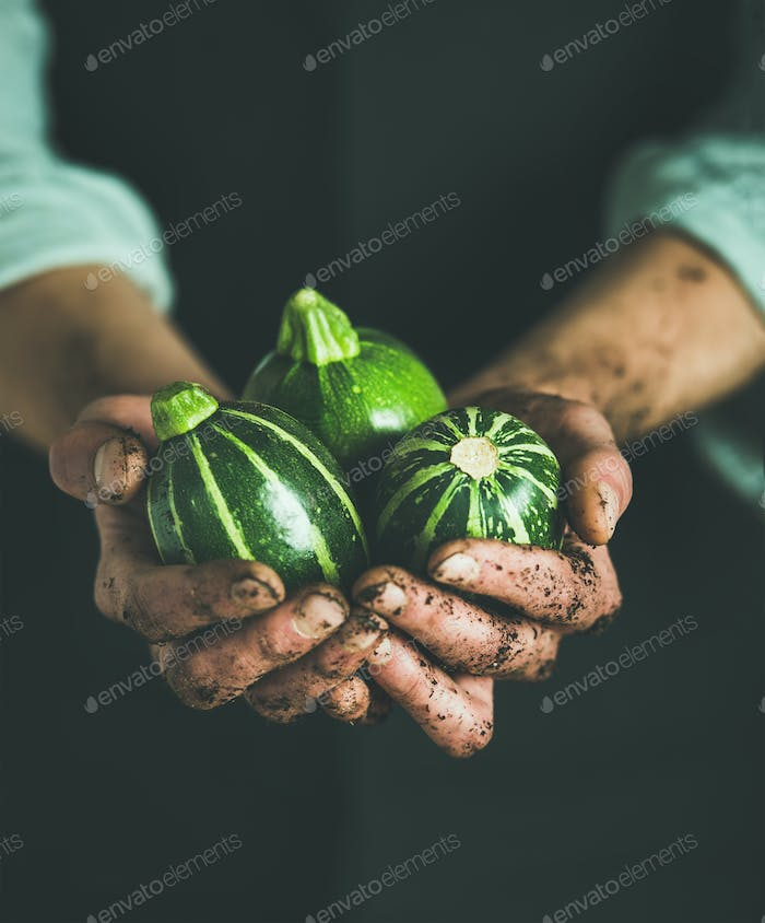 Man wearing black apron holding fresh green zucchinis in hands