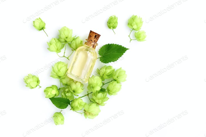 Hop cones (Humulus) with medicinal plant extract in glass bottle
