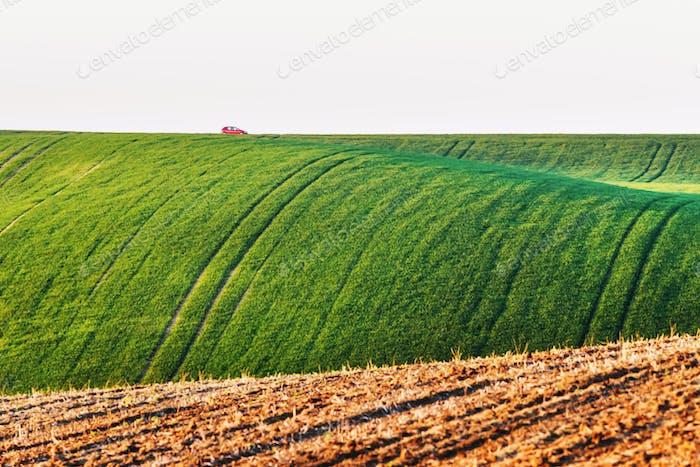 Mährische landwirtschaftliche Felder