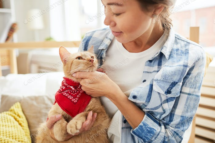 Cat Wearing Bandana