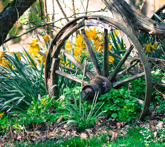 Vintage wooden wheel in the garden