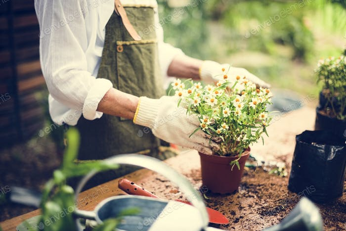 A woman is planting flowers
