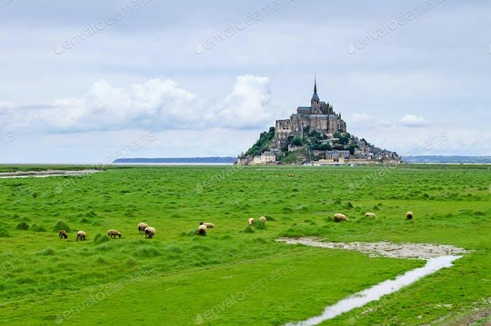 Sheeps grazing near Mont Saint Michel landmark. Normandy, France, Europe.