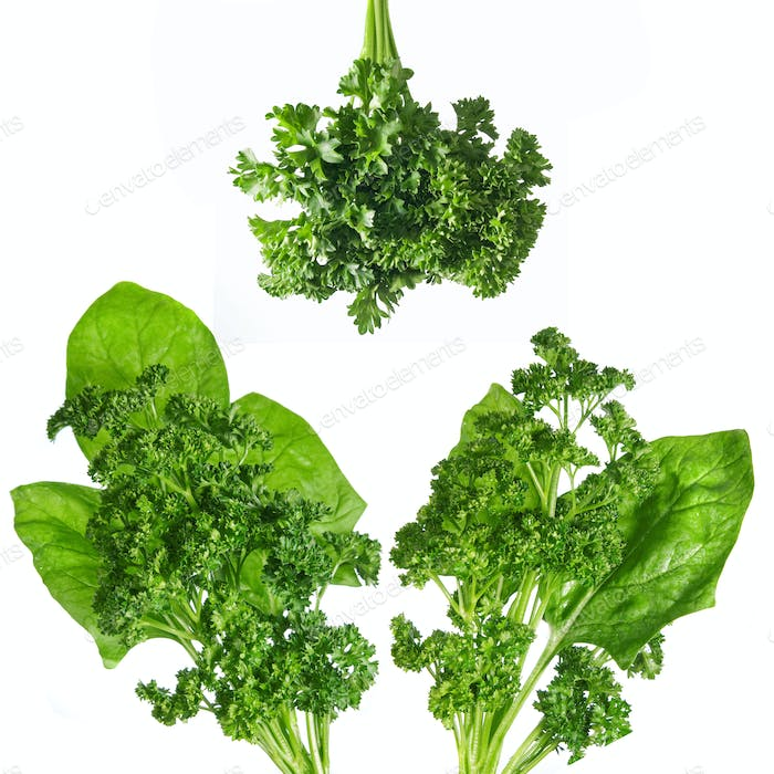 green spinach and parsley isolated on white
