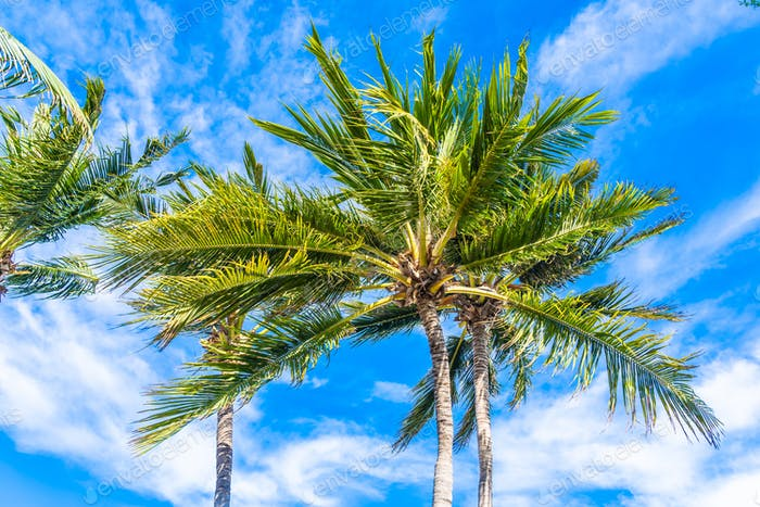 Beautiful tropical nature with coconut palm tree on blue sky and