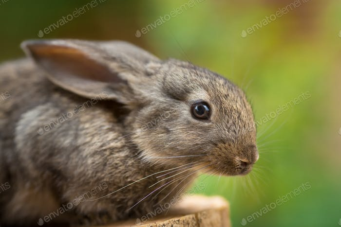 Lovely Rabbit. Beautiful animal of wild nature