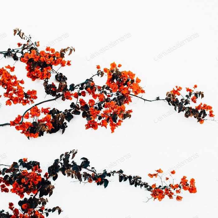 Red flowers on a white wall background minimal art